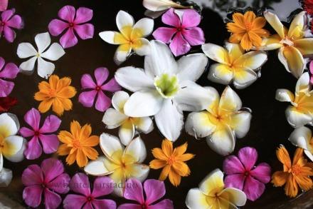bali_flowers_4j