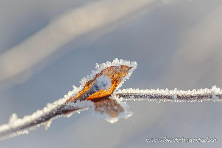 frost_jan_cw-4