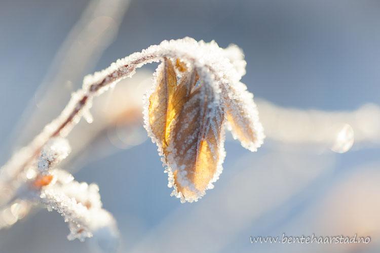 frost_jan_cw-5