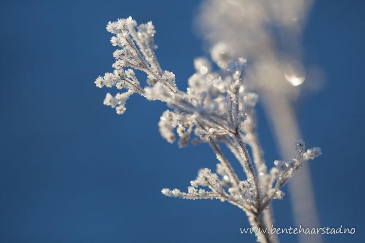 vinter_januar_cw-2