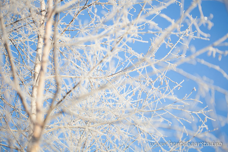 vinter_januar_cw-4