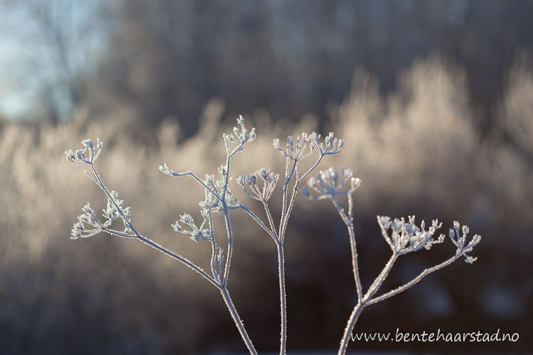 vinter_januar_cw