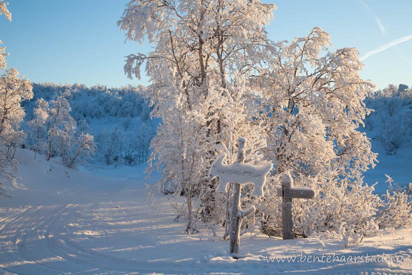 vinter_trondelag_cw-5