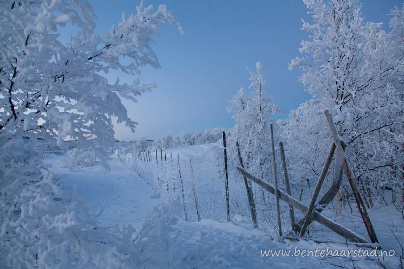 vinter_trondelag_cw-6