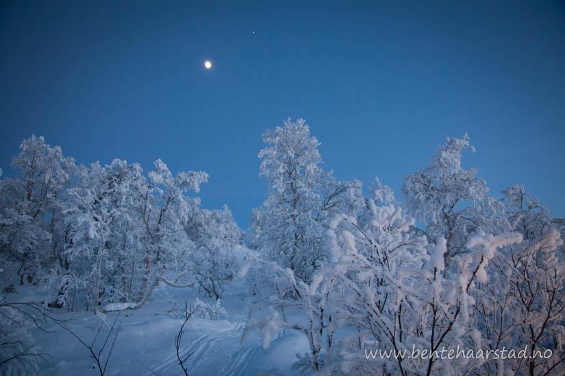 vinter_trondelag_cw-9