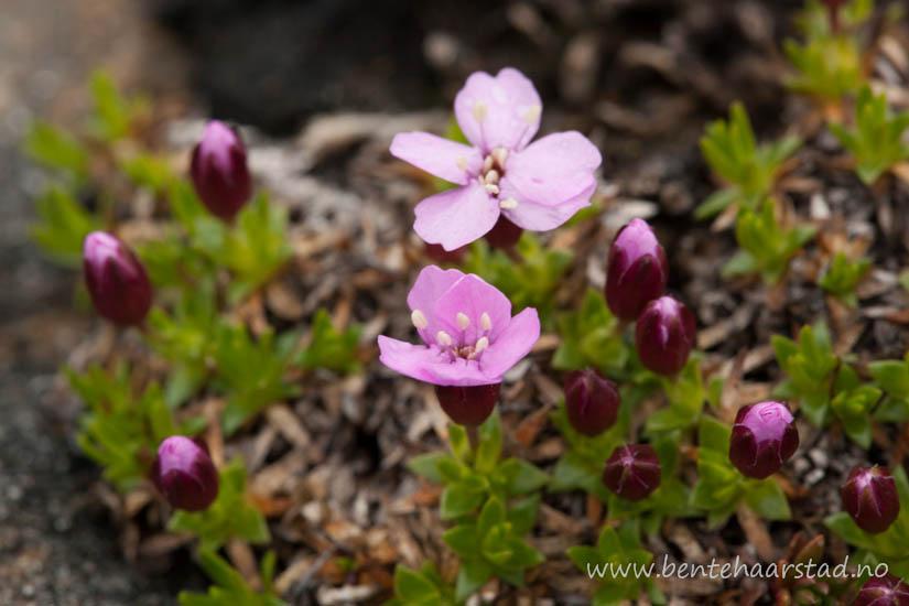 flora_glomfjellet_cw