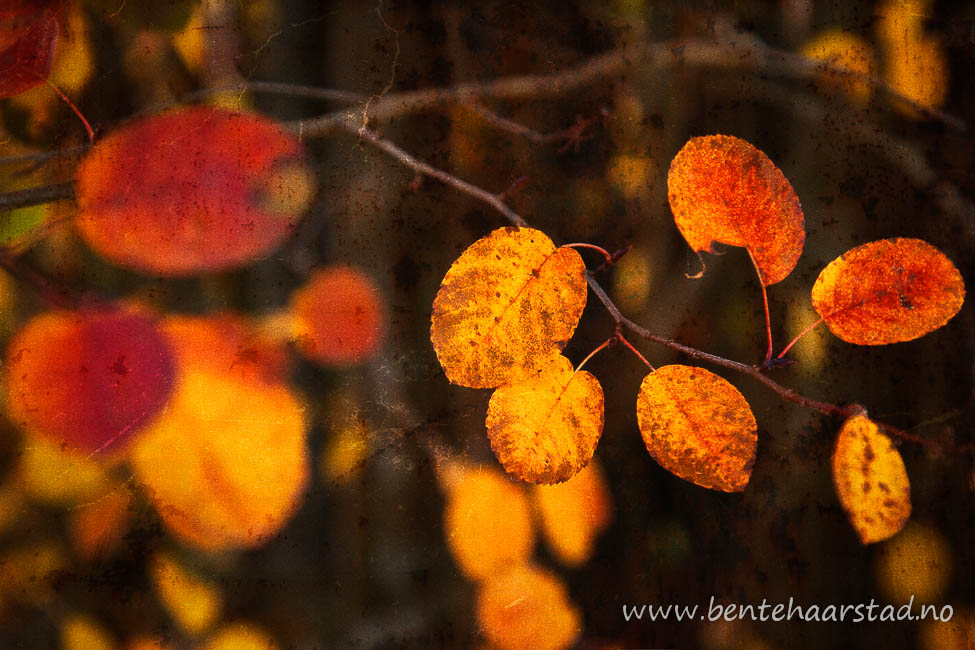 autumn_colours_cw-3