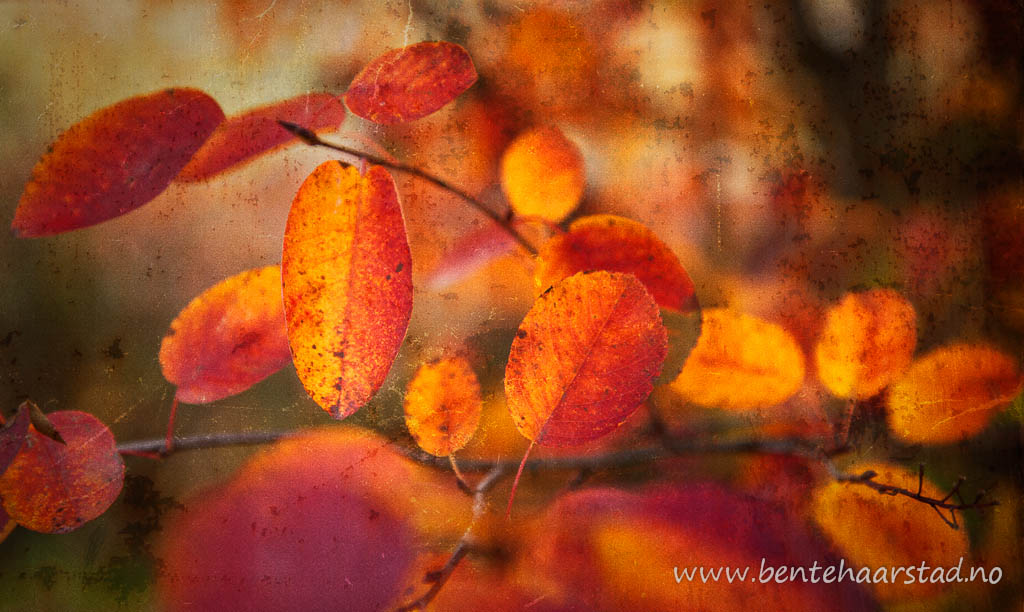 autumn_colours_cw-4