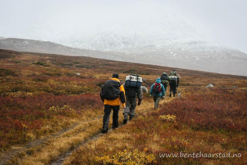 Utplassering av fem fjellrev i Sylene. Foto: Bente Haarstad