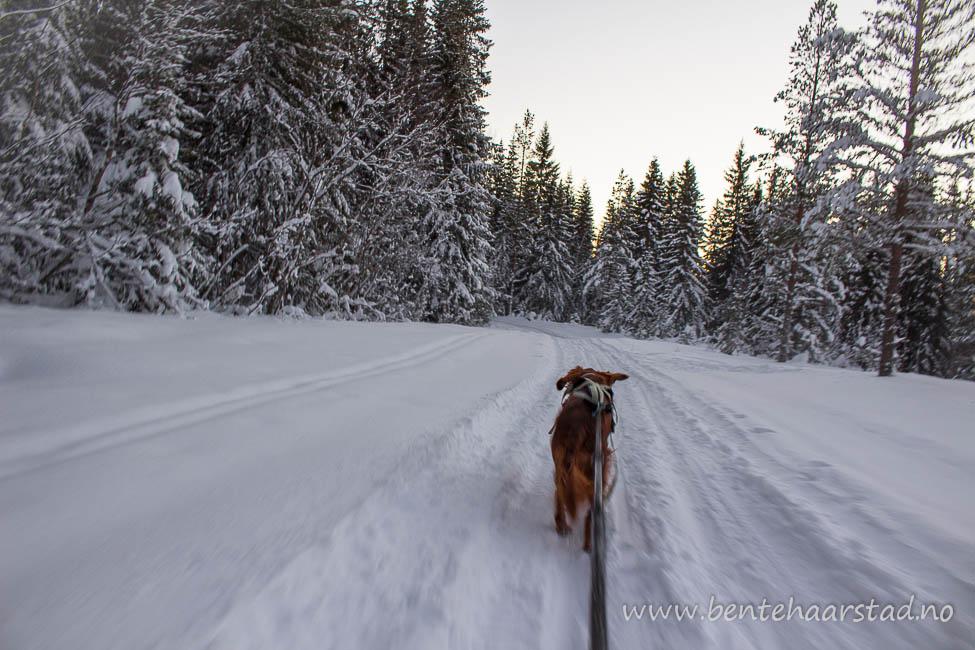 skitur_haugene_dcw