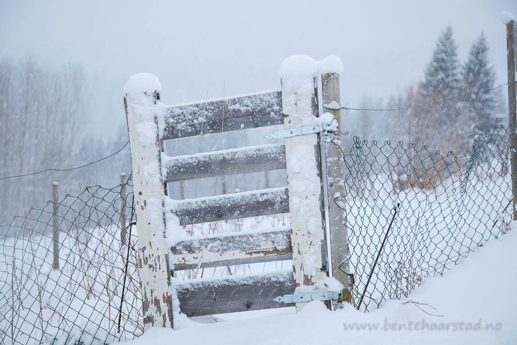 gjerde_vinter_cw