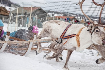 reindeer_racing_cw-2