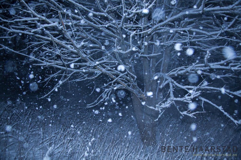 winter_night_snow_cw-3