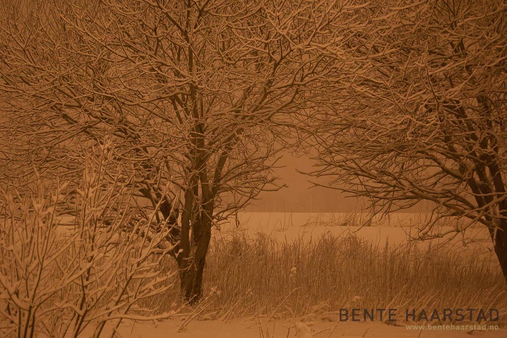 winter_night_snow_cw