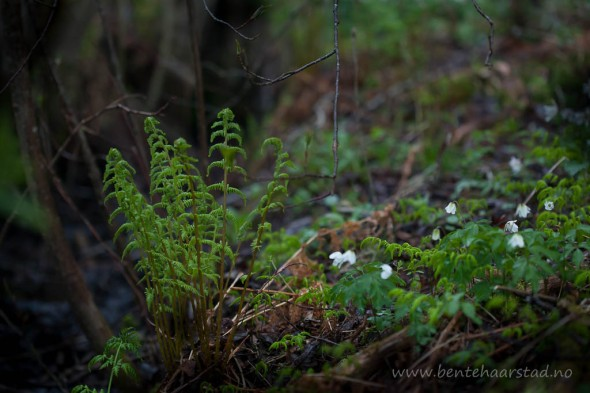 forest_spring_cw-2